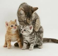cats and kittens pictures. Plain Kittens Cats And Kittens Playing1 Inside Cats And Kittens Pictures 0