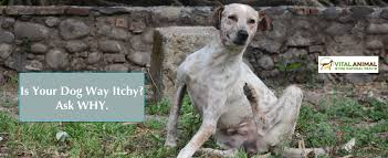 Your Dog's Itchy Skin Update: Still #1 Dog Sickness