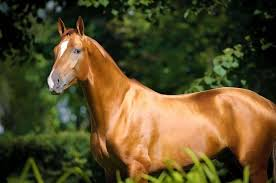 Image result for What To Feed a Horse - Essential Horse Supplements