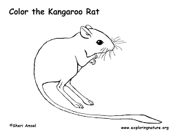 Small Picture Kangaroo Rat Coloring Page