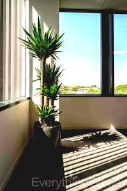 plants for office cubicle. Everything Grows Beautiful New Indoor Plant In The Office With Lots Of Light Best Plants Images For Cubicle