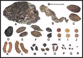 Pest Dropping Identification Chart Rocky Mts Scat Coyote Hunting Moose Animal Mule Deer