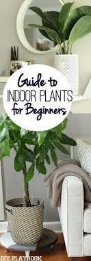 tall office plants. the 25 best tall indoor plants ideas on pinterest lounge seating and for office