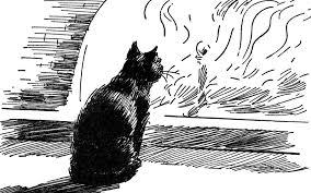 quotes from edgar allen poe s the black cat  black cat