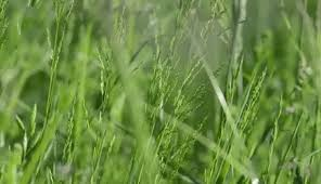 green grass field animated. Green Grass Field Animated K