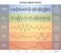 Human Brain Waves Diagram Chart Illustration En Franais