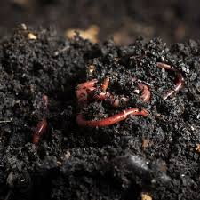 using worms
