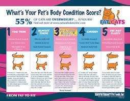Obese Cat Chart Qmsdnug Org