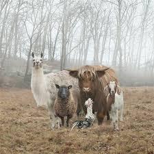 Resultado de imagen de el animal invisible mafa alborés