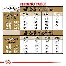 Royal Canin Diet Chart Royal Canin Yorkshire Terrier Puppy Dry Dog Food Petsense