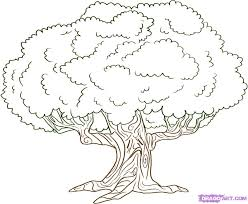 how to draw family tree photos picture of tree to draw drawings art gallery