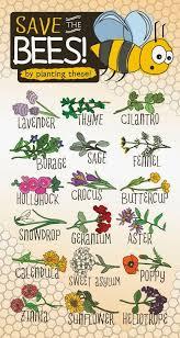 saving bees and erflies