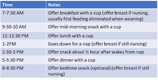 Feeding Schedule For Toddler Nutrition Guide Megan