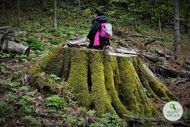 Investigatie: Masacru in parcurile nationale din Romania | Agrostandard