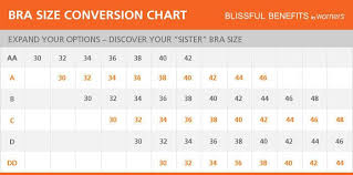 Blissful Benefits Womens Underwire Contour Lift Bra