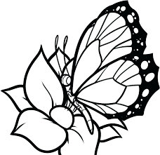 Coloring Pages Of Butterflies To Print Butterfly Wings Coloring