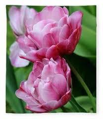 double bloom tulip fleece blanket by karen silvestri