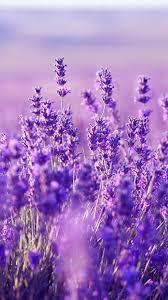 Purple flowers wallpaper ...