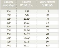Squirrel Food Diet