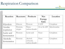 respiration comparison