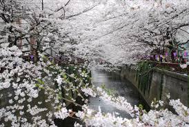 Mengenal Kebudayaan Jepang (Bunka, Matsuri, Ongaku, Eiga , Iro-iro Aru)