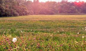 green grass field animated. Field Storm Flowers Grass Sun Wildflowers Nature Sunset Country Evening Green Fields Animated Wallpaper - 1791x1259 E
