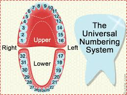Standard Dental Chart Dental Charts To Help You Understand The Tooth Numbering System
