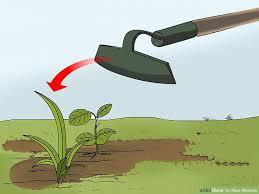 image led hoe weeds step 9