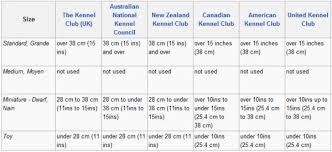 Aussiedoodle Size Chart Poodle Height Chart Goldenacresdogs Com