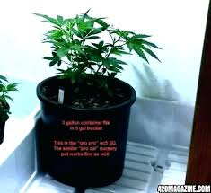 Plant Pot Sizes Chart Explained Flower Scalajobs Co