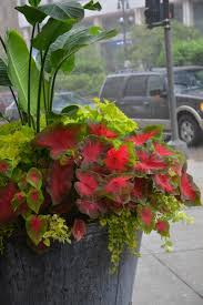 Small Picture 386 best Coleus images on Pinterest Shade garden Flower