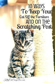 keep cats off furniture ways to your cat the wall how