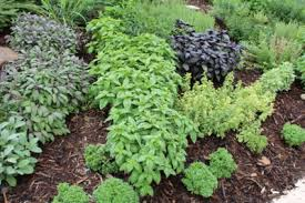 Small Picture Garden Design Garden Design with Compact Herb Garden Rocket