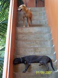 A Dog's Life in God's own Country: Petition Stop the Brutal Killing of Dogs