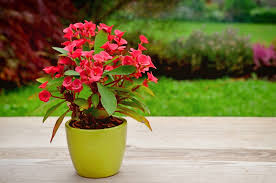 easy garden plants crown of thorns easy garden plants k