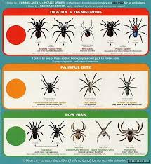 Pin By Brad Beatty On Cool Survival Tips Spider