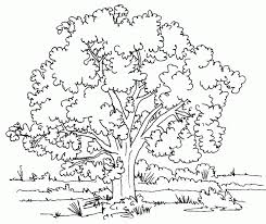 Small Picture Oak Tree Black White Line Art Coloring Book Colouring Svg K