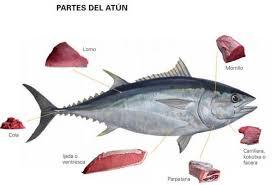Resultado de imagen de atun rojo