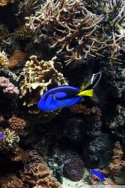 Fish Tank Live Wallpaper 50 Download 4k Wallpapers For Free