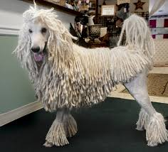 akc names top dog breeds local experts advise lifestyle lancaster