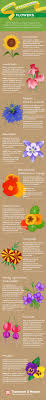 top ten easy to grow flowers infographic from thompson morgan