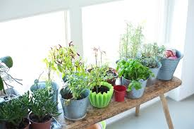 Feng Shui Your Home For Better Organic Life  DoctbookFeng Shui In Your Home