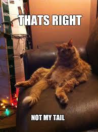 Overly Confident Cat memes | quickmeme via Relatably.com