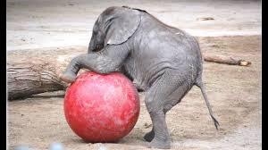 A Cute And Funny <b>Baby Elephant</b> Videos Compilation || NEW HD