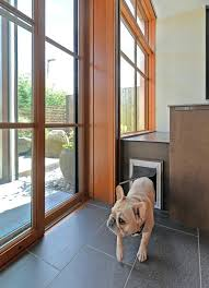 8 types of pet doors how to choose the best one for your home wall entry