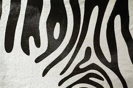 round black and white cowhide ottoman zebra on stencil moss manor rug black and white cowhide fabric rug
