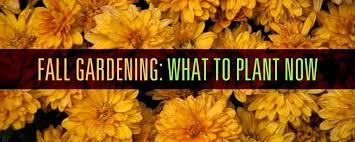 Fall Gardening Tips U0026 Ideas  HGTVFall Gardening