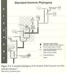 Hominin Chart Human Evolution With Christian Eyes