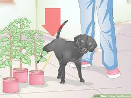 Dog Diaper Size Chart How To Buy Dog Diapers 12 Steps With Pictures Wikihow