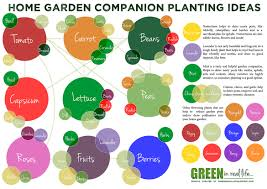 Kitchen Garden Companion Green In Real Life Ideas For The Home Garden Companion Planting